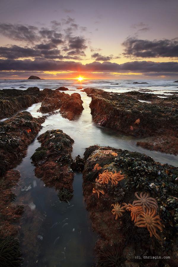 Starfish Sunset by chrisgin