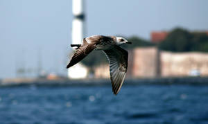 SEAGULL FLYING IN ISTANBUL2 by ssonmez
