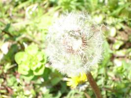 Blow Ufle Bakalim by ssonmez