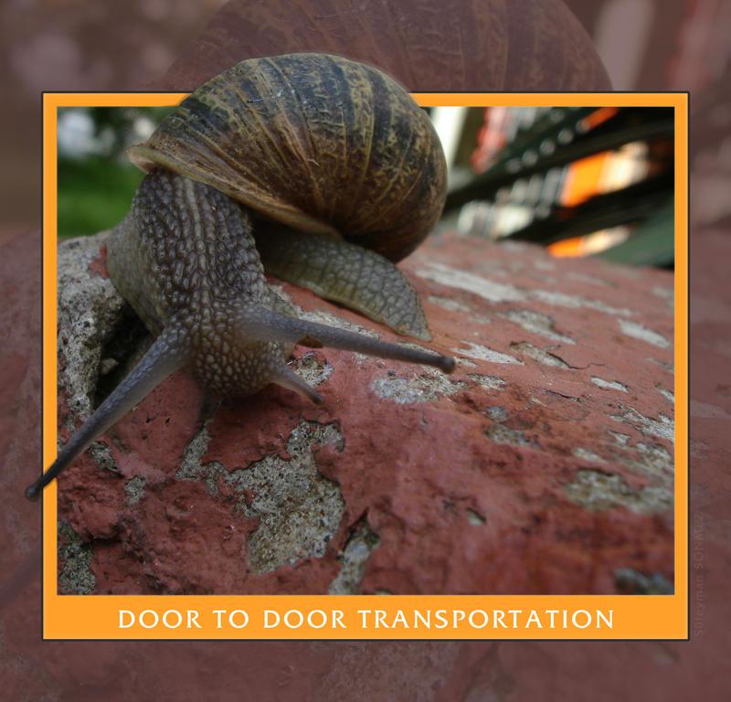 Snail door to door transport by ssonmez on deviantart for Door to door transport