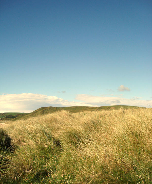 meadow by svenska-anseende