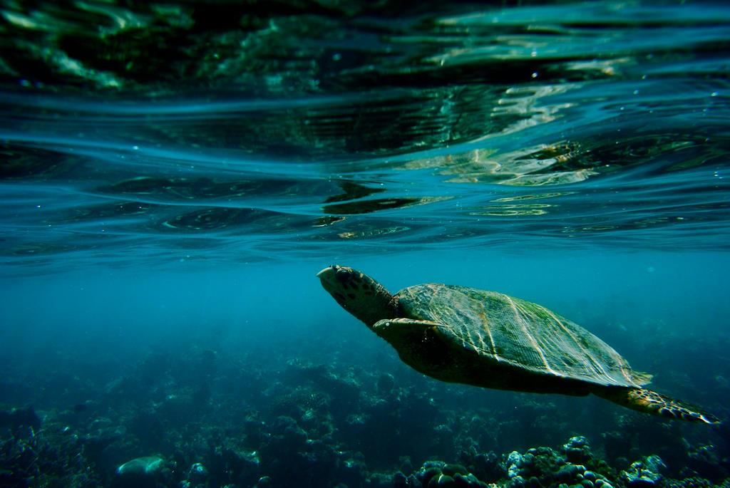 turtle III by svenska-anseende