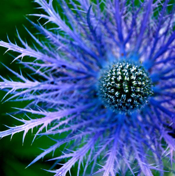 flower by svenska-anseende