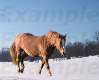 Horse in the Snow by MyGodLives