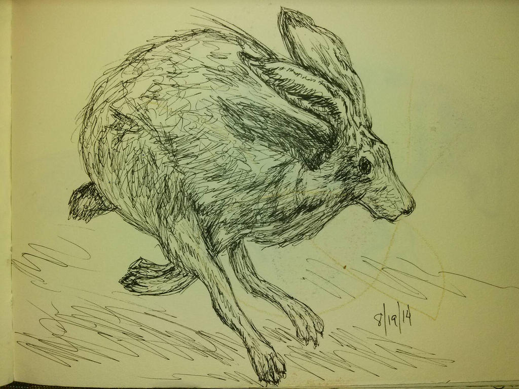 Jackrabbit in Motion by Orchid-Black