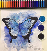Butterfly  by arielim