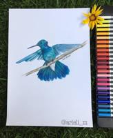 Hummingbird by arielim