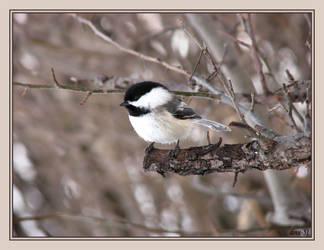 Backyard Friend by dove-51
