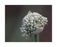Bridal Bouquet by dove-51
