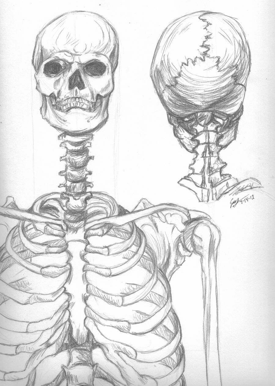 Skeleton Study by RheaZar