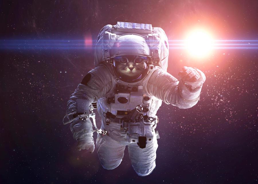 Astrocat by VadimSadovski
