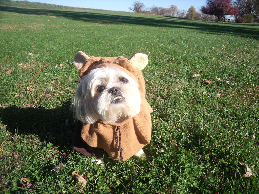 Gizmo the Ewok by Moonstone27