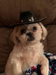 Cowboy Gizmo 2019