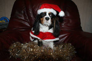 angel cavalier all set for xma by angelsmommy