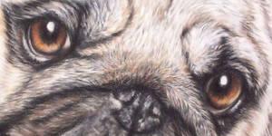 Pug -detail