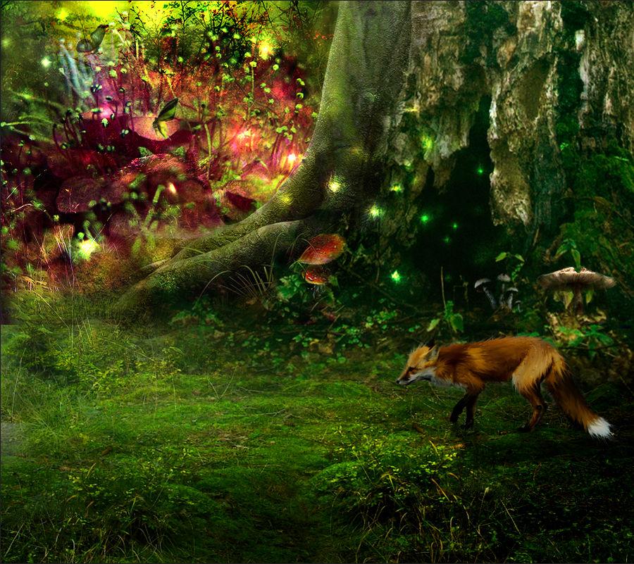 Forest of Tiliou
