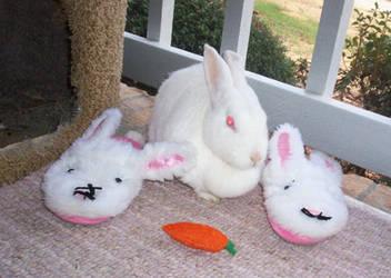 Bunny fun.