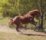 Horse stock - Rearing