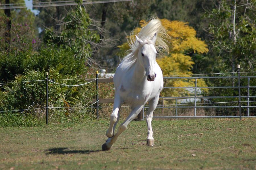 Ficha de Lucero  Horse_stock___Odd_position_by_Chunga_Stock