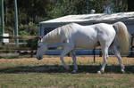 Horse stock - Walking looking