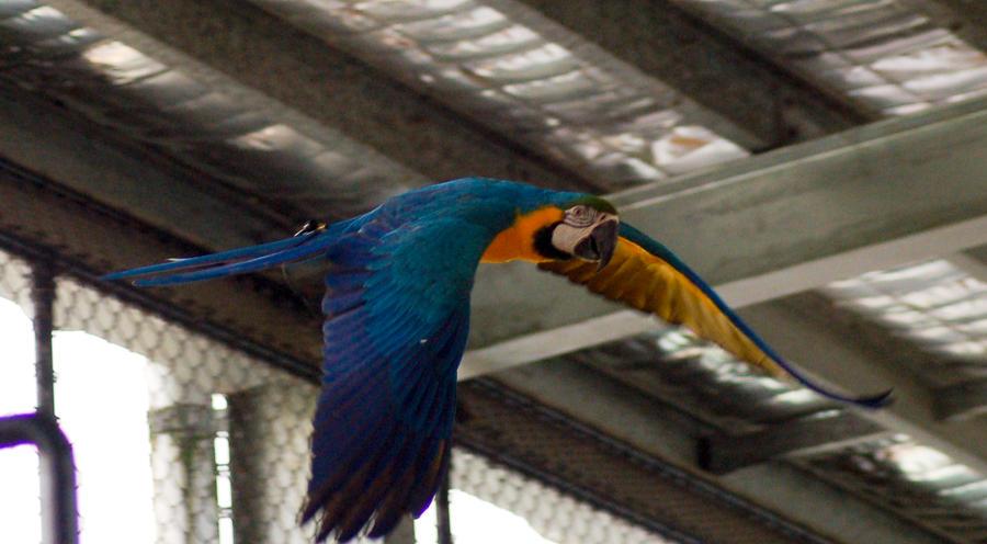 11 Macaw by Chunga-Stock