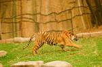 64 Tiger landed