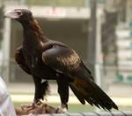 6 Eagle stock
