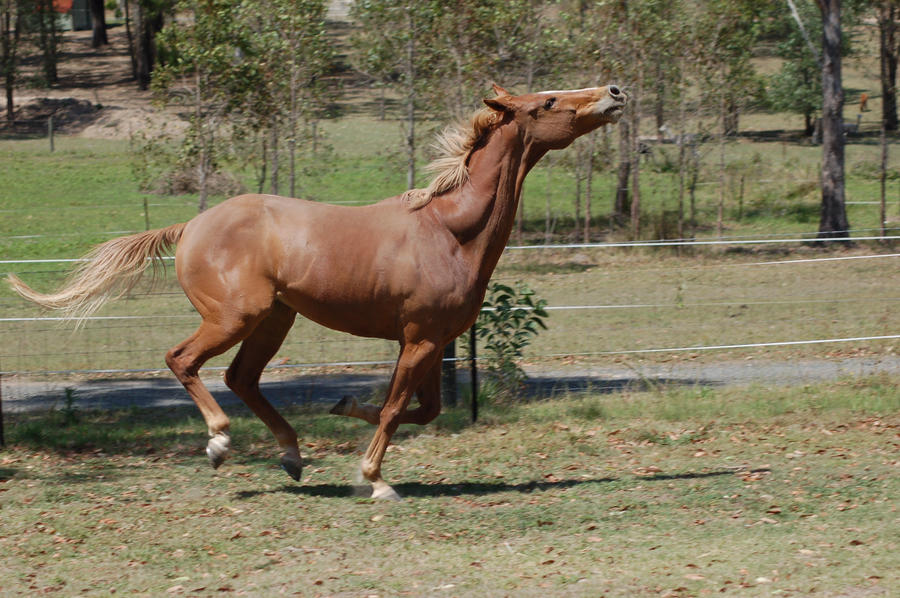 41 Galloping head right up by Chunga-Stock