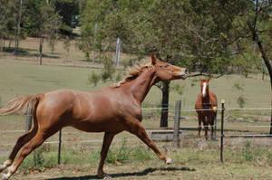 42 galloping head flick by Chunga-Stock