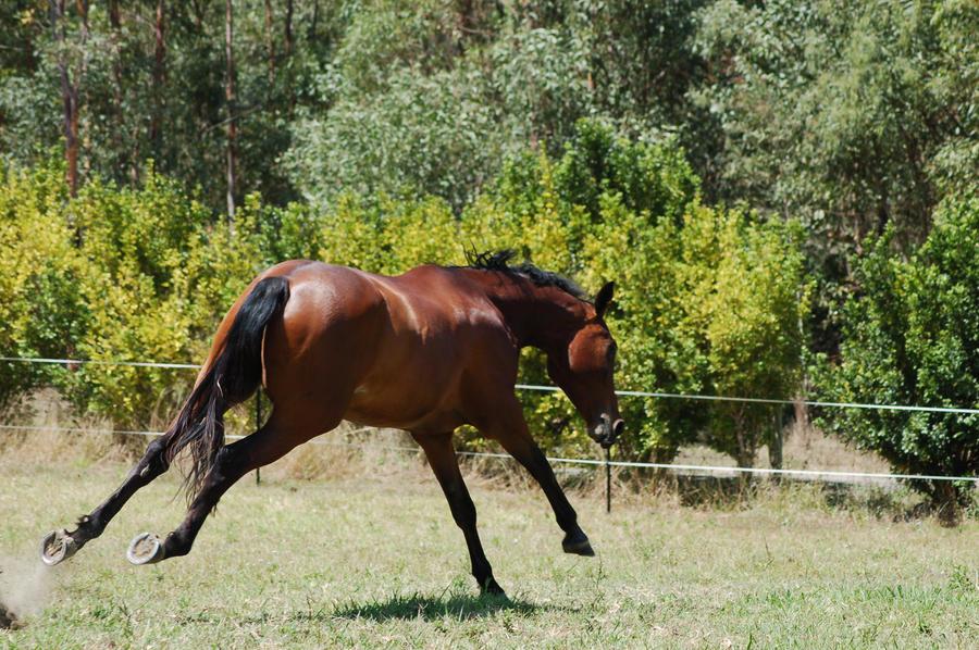 110 WB bucking- lunge-gallop by Chunga-Stock