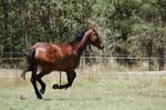 114 WB Gallop by Chunga-Stock