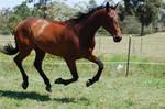 183 WB Galloping full suspensi