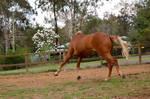 25 Headless horse