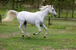 Arabian suspension
