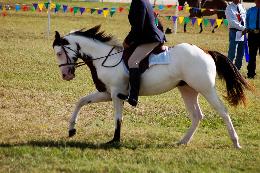 paint ridden canter by Chunga-Stock