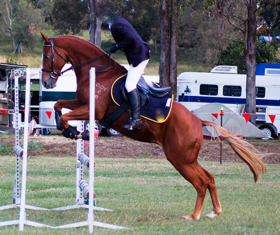 showjumping side on flaxen by Chunga-Stock