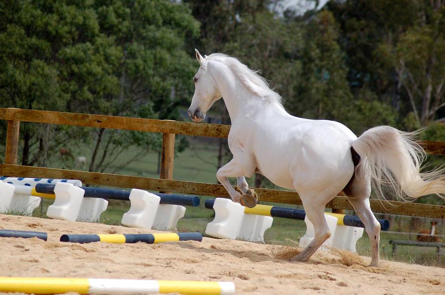 Arab rear jumping pose legs up by Chunga-Stock on DeviantArt