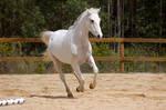 Arab gallop back leg down