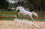 Arab Jumping no tack form side