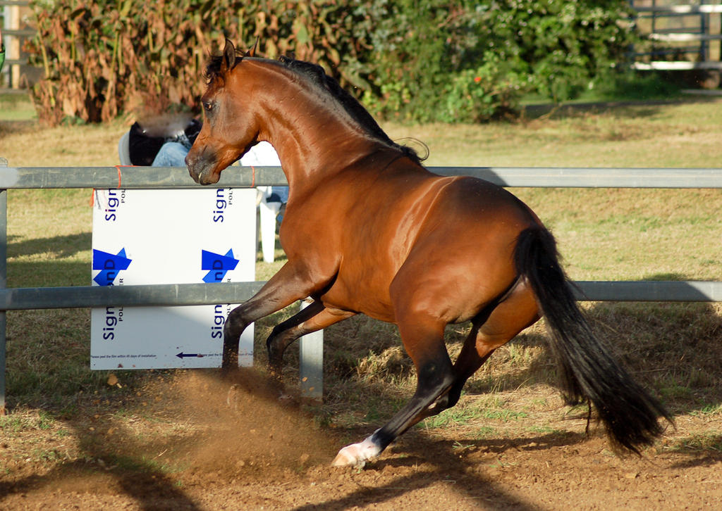 JA Arab fast spin leap from behind by Chunga-Stock