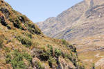 NZ Mountain side ledge