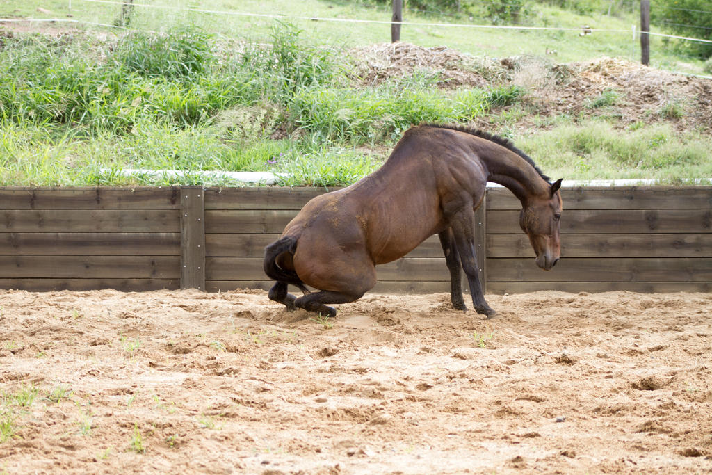 KM Old TB sitting getting up side view 3 by Chunga-Stock