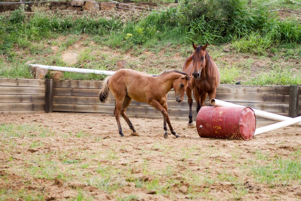 Km Foal buckskin shying sdie view by Chunga-Stock