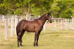 Dn Stud Photo - Black Pony