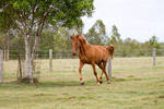 Dn warmblood neck arched trot