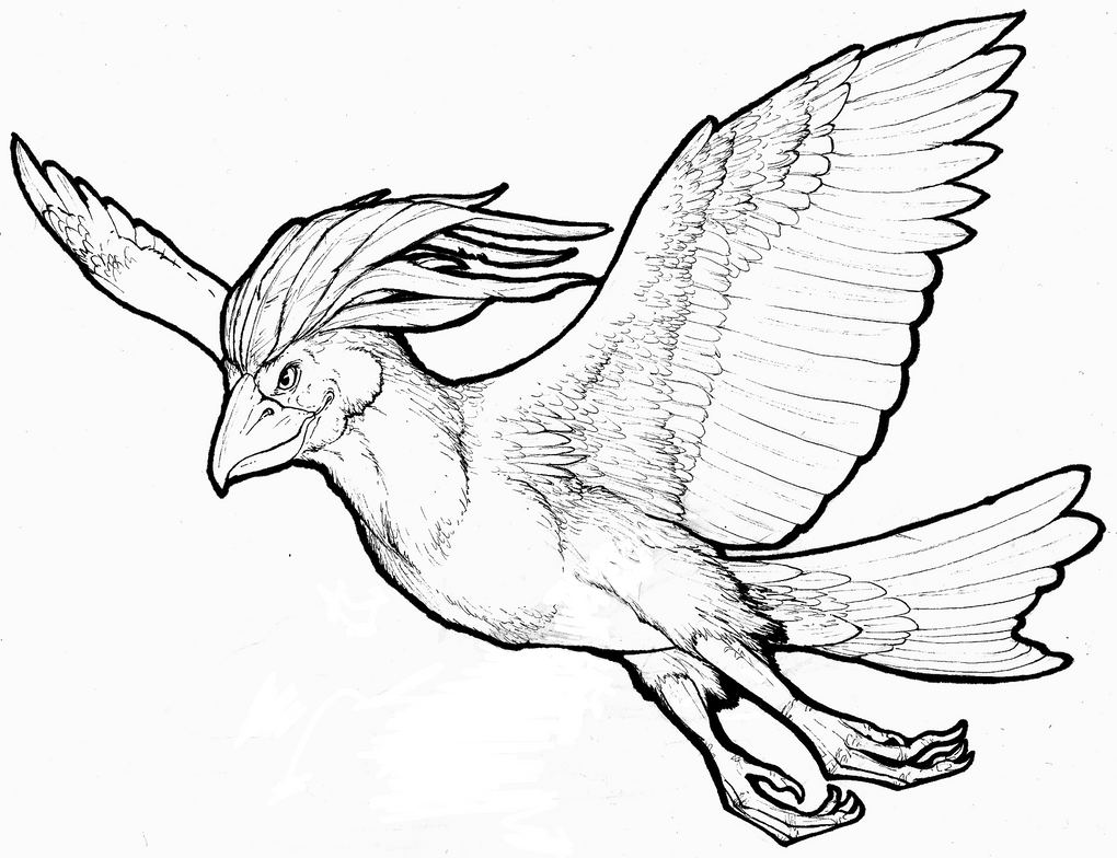 pidgeot pokemon coloring pages - photo#28