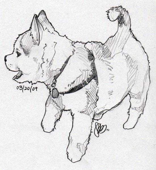siberian husky puppy by heycheri