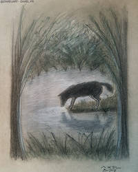 Wolf - Pencil Art