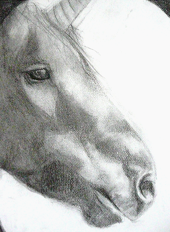 REALISTIC UNICORN by DannyPhantomFreek on DeviantArt