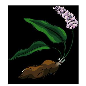 Bistort Root by ReapersSpeciesHub